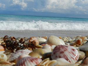 Sea shells on the beach, Hutchinson Island Florida