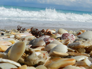 Seashells & Beach glass Hutchinson Island