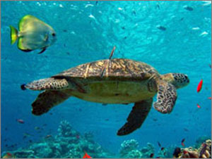 Hutchinson Island, Florida, Sea Turtle