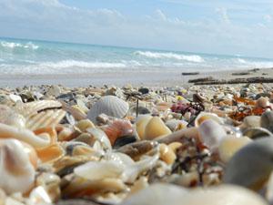 Seashells Hutchinson Island